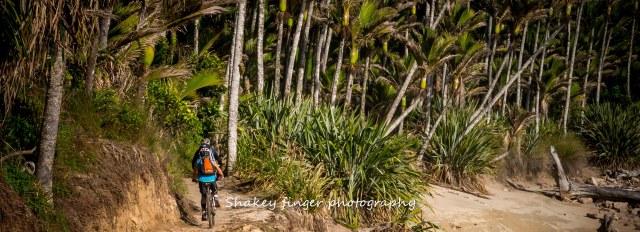 sand, surf and bush mountain biking heaphy track