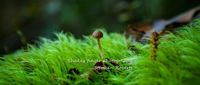 hidden treasures in the undergrowth - fungi