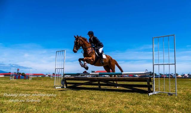Show jumping buller a&p show