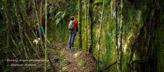 admiring tree roots charleston walk