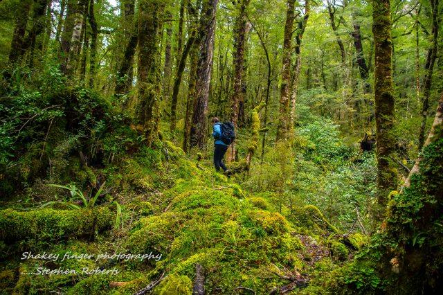 forest of green klondyke hike