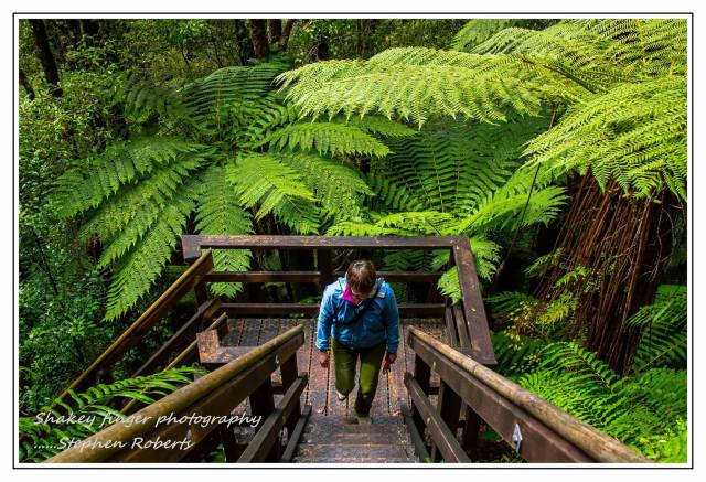 up the stairs by the tree ferns woods creek track west coast