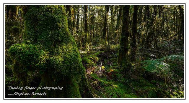NZ native bush Moonlight Track